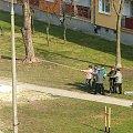 Akcja zorganizowanej grupy przewracaczy drzew #Puławy