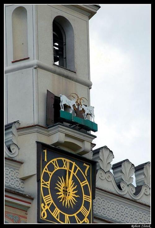 """koziołki """"uciekły"""" na wieżę ratuszową #Poznań #Warta #koziołki"""