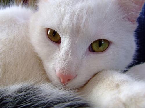 kunowaty #KunaDomowa #KunaKot #kot #kotek #zwierzak #BiałyKunowaty #Kazio #KotKazio #dziwne #śmieszne #BiałeMałe #małe #ślepia #MińskMazowiecki #mińsk
