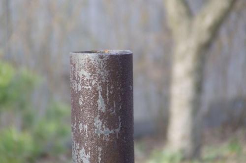 rurka #rura #rurka #zardzewiała #brązowa #ogród #drzewo #dziwne #wystaje #MińskMazowiecki #mińsk