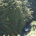spoglądam na drogę do Hana, która nas jeszcze czeka, #pawie #Hawaje #Maui #Hana #natura