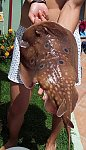 images20.fotosik.pl/147/4e8fe66762ee6b7em.jpg