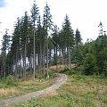 Beskidek (830 m.) #góry #Beskidy #BeskidŚląski #Szczyrk