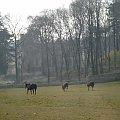 Poranny wybieg #DolnyŚląsk #jawor #myślibórz #krajobraz #przyroda #WąwózMyśliborski #rataj