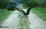 http://images20.fotosik.pl/178/efdc1100bac2070dm.jpg