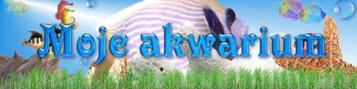 ----------------FORUM Moje Akwarium---------------