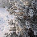 Zimowa choinka #Widoczek