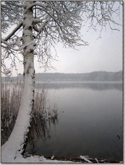 Nawet łabędzie jeszcze gdzieś śpią w szuwarach... #zima #krajobrazy #rośliny #śnieg #drzewa #wieś #jezioro