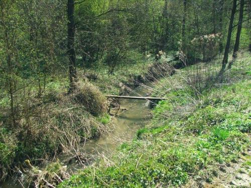 Potok Witoszyński #rzeka #rzeczka #strumień #Witoszyn