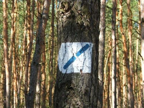 Ścieżka dydaktyczna nad Jeziorem Nury #Gołąb #las