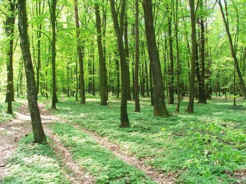 W Kozim Borze #las #KoziBór