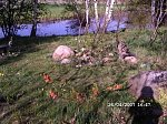 http://images20.fotosik.pl/310/6b4b578ccb78744bm.jpg