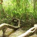 #drzewa #natura #Przelewice #rośliny