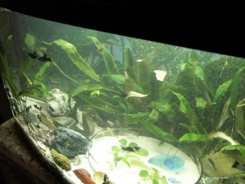 Nowe akwarium 8.V.2007 #akwarium