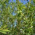 #gałęzie #dzrewo #krzaki #zarośla