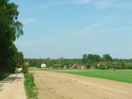 Droga w stronę lasu #Trzcianki #pola
