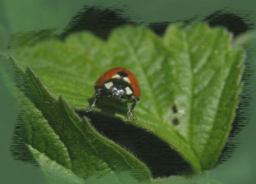 #wiosna #owady #fauna #biedronka