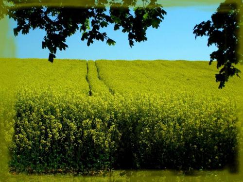 #flora #kwiaty #natura #ogrody #PolaŁąki #PoryRoku #przyroda #rośliny #wiosna