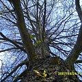 #drzewo #gałęzie