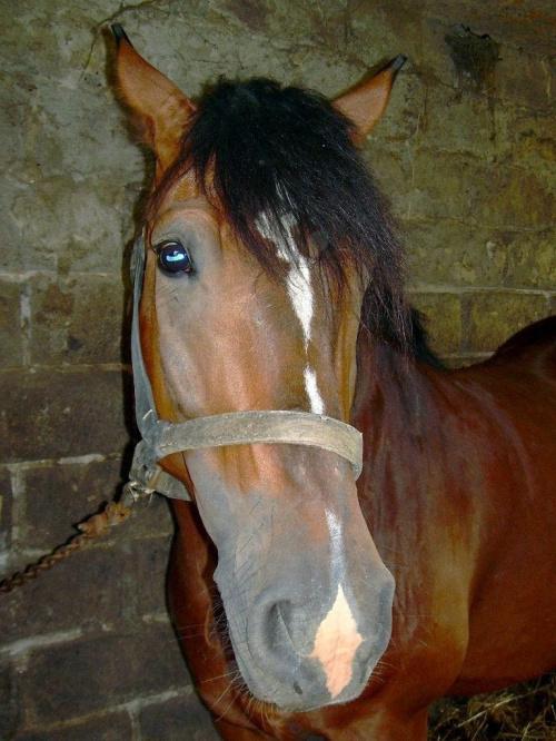 mamusia źrebaczka:)))) trochę się bała... #koń #konie #klacz