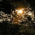 #Przyroda #natura #nature #DerNatur #ZachódSłońca #sunset #DerSonnenuntergang #drzewa #tree #DerHund #jezioro #lake #DerSee