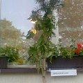 III Rajd turysztyczny st. kraszew 19-20 maja 2007 #maj #maja #turystyka #rajd #kraszew #stary