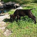 Ooo jaka duża kałuża. #Orion #pies #szczeniak