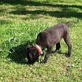 Mała znajda poznaje świat. #Orion #pies #szczeniak
