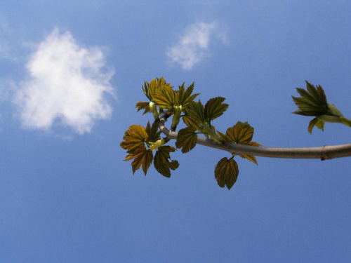 #drzewa #chmury