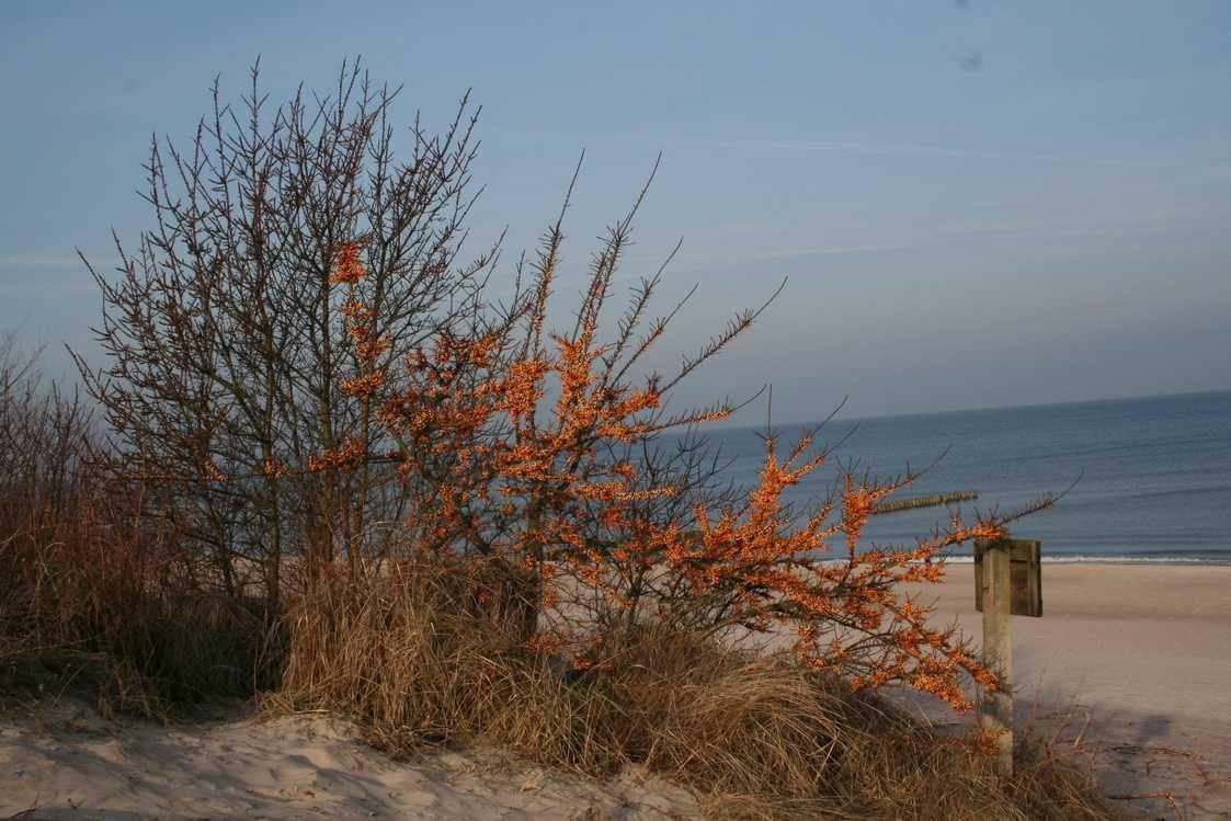 http://images20.fotosik.pl/68/bb5738c4b589b5c3.jpg
