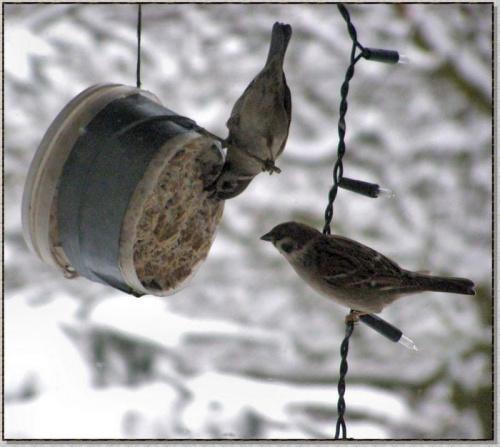 #zima #ptaki #natura #przyroda #zwierzęta