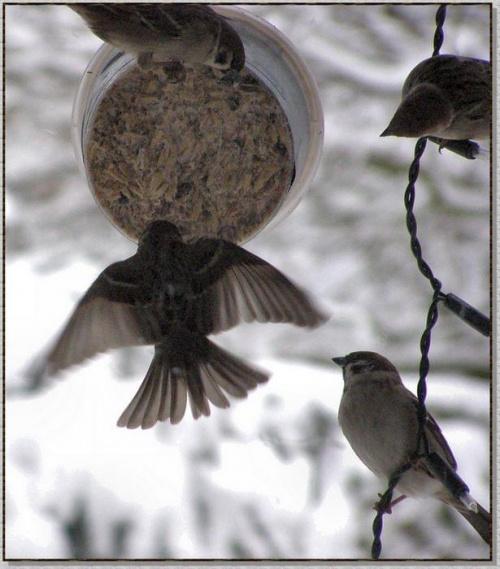 #zima #ptaki #natura #przyroda