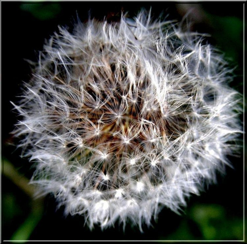zima idzie, a wy ciągle u mamusi :| #kwiaty #natura #rośliny #ogrody #ogród #łąki #przyroda #flora