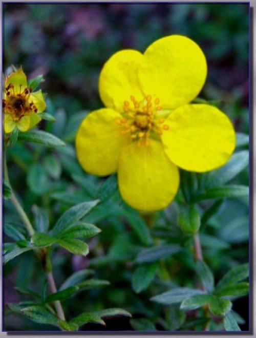 #kwiaty #natura #rośliny #ogrody #ogród #łąki #przyroda #flora