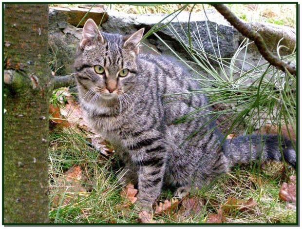 Sesja z Rzepką #zwierzęta #fauna #koty